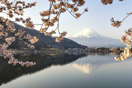 Fuji Mountain Reflection and Sakura at Kawaguchiko Lake in Spring, Japan