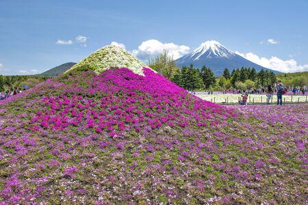 ourists enjoy sightseeing Shibazakura Pink Moss in Spring with Fuji Mountain Background, Motosu Lake, Japan Foto de archivo