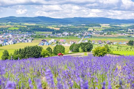 Small Red Farm House in the Lavender Field on the Hillside of Hinode Farm in Summer, Furano, Hokkaido, Japan