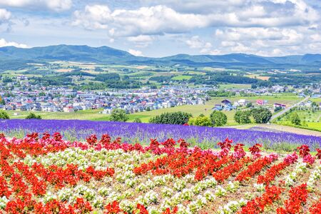 Scenic view of Colourful Flower and Lavender Field on Hillside of Hinode Park, Furano, Hokkaido, Japan