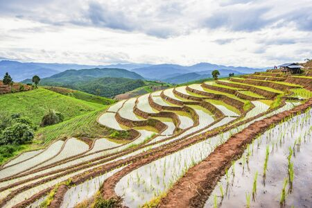 Step ladder rice filed, Ban Pa Bong Piang Hill tribe village, Chiangmai, Thailand. Foto de archivo