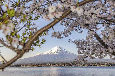 Fuji Mountain in Sakura Frame in Spring at Kawaguchiko Lake, japan