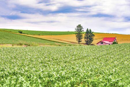 Scenic Landscape of Red Farmer Hut located among Crop Fields in Summer, Biei Patchwork Road, Hokkaido Foto de archivo