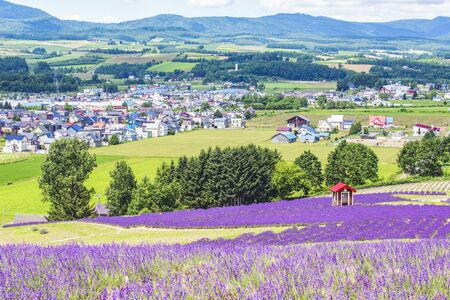 Colourful Flower and Lavender Garden on hIllside of Hinode Farm in Summer, Hokkaido, Japan Foto de archivo - 149776244