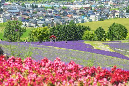 Colourful Flower and Lavender Garden on hIllside of Hinode Farm in Summer, Hokkaido, Japan