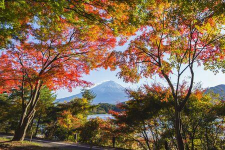 Fuji Mountain in the Frame of Colourful Maple Trees in Autumn at Kawaguchiko Lake, Japan