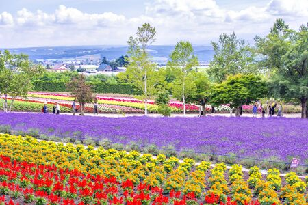 Tourists enjoy sightseeing colourful flower garden in summer at Tomita Farm, Hokkaido, Japan