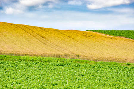 Scenic view of Agriculture and Crops Field at Biei Patchwork Road in Summer, Hokkaido, Japan