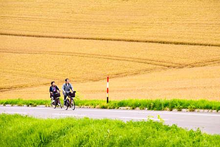 Japan - July 19, 2019 : Tourists biking bicycles along the local road with Golden Crop Field Background in Summer, Biei Patchwork Road, Biei, Hokkaido