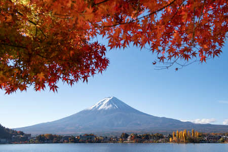 Fuji Mountain with Red Maple Leaves in Autumn Sunny Blue Sky Day at Kawaguchiko Lake, Japan