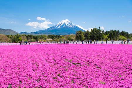 Japan - May 9, 2019 : Tourists enjoy sightseeing Shibazakura Pink Moss Garden in Spring with Fuji Mountain Background, Fujinomiya, Shizuoka Editorial