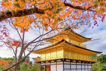 Golden Pavilion of Kinkakuji Temple with Maple Tree in Autumn. Kyoto, Japan