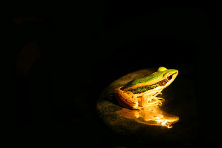 Green frog sitting