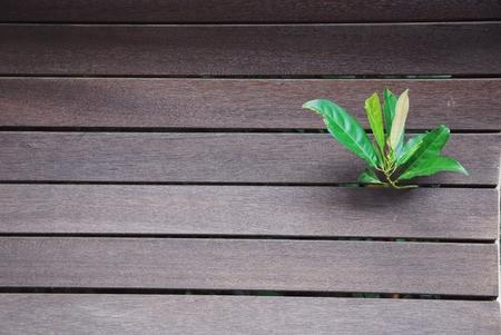 leafs: Leafs bunch through wood wall, background.