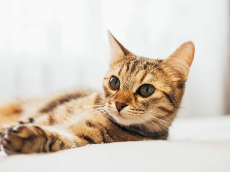 Cat lies on a white bed with a gray plaid.