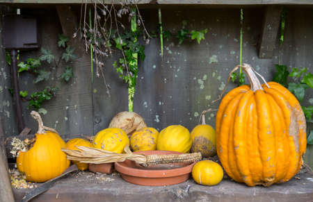 corrugated iron: pumpkins on wood table, corrugated iron background Stock Photo