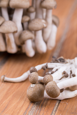 Brown Shimeji Mushrooms, with selective focus