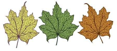 Vector set of isolated pattern with wonderful colorful falling and flying maple leafs, hand-drawn, graphic, real-style. Seasonal colors: orange, yellow, brown, green. Looks watercolor, fresh, graphic