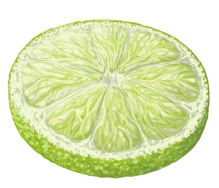 Vector isolated pattern object, hand-drawn harvest juicy, delicious rich wet green lime circle piece, with highlights, beautiful lime peel. Realistic, like paint. Ripe, juicy, fresh lime, ingredient
