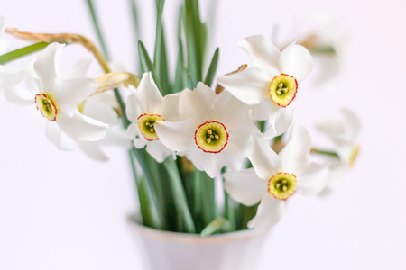 A close up shot of Beautiful White Narcissus bouquet with white background with selective focus