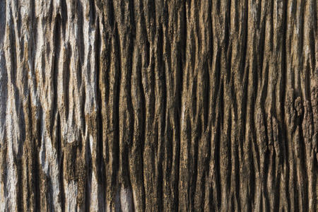 wood surface: Old wood surface