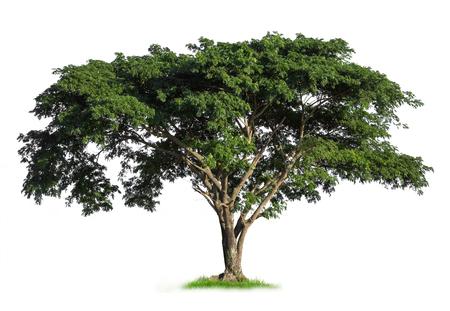 Isolated tree on white background 免版税图像 - 49137235