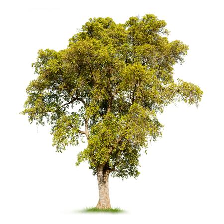 白い背景の分離の大きな黄色の木