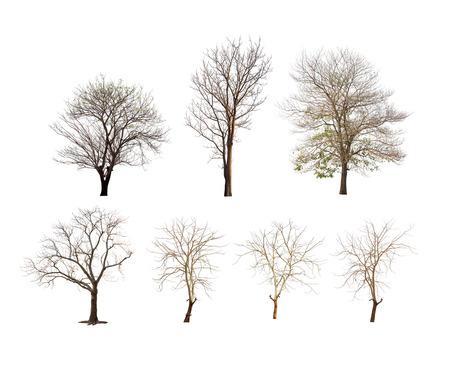Collection d'arbres sans feuilles ou arbre d'hiver ou arbre mort sur fond blanc