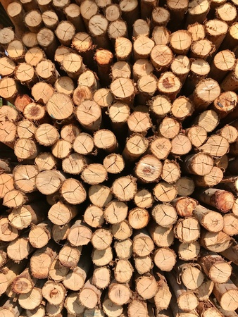Wood log background Reklamní fotografie - 86229700