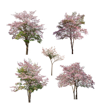 Collection of isolated tree with pink flower on white background Stock Photo