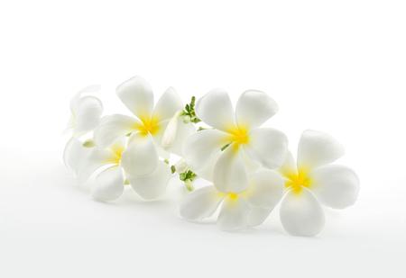 クリッピング パスと白で分離された熱帯の花フランジパニ プルメリア
