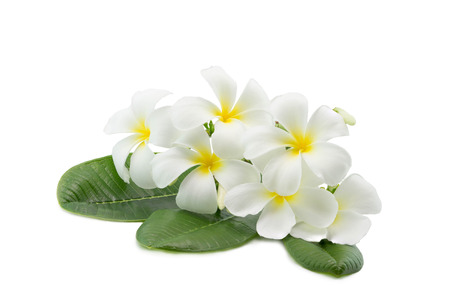 Tropical flowers frangipani plumeria isolated on white with clipping path