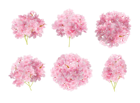 collection of pink flower isolated on white background with clipping path