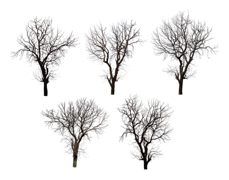 Collection of dead tree isolated on white background high resolution for graphic decoration, suitable for both web and print media Stockfoto