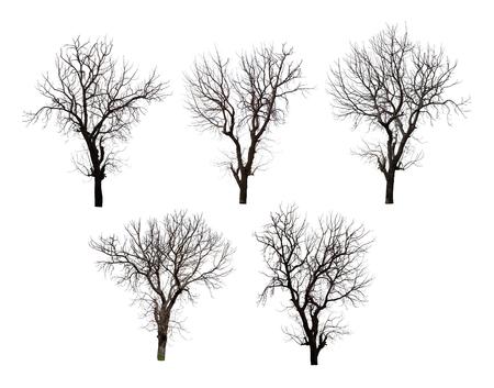 Verzameling van dode boom geïsoleerd op witte achtergrond hoge resolutie voor grafische decoratie, geschikt voor zowel web-en gedrukte media Stockfoto