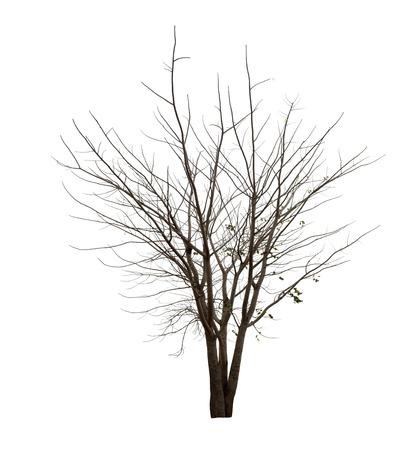 白い背景に黒い木のシルエットや枯れ木