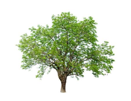 ウェブと印刷メディアの両方に適したグラフィック装飾のための白い背景の高解像度に隔離された木