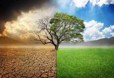 Dead and alive tree in a split of crack wasted land and green meodow field a concept of climate change and global warming Archivio Fotografico