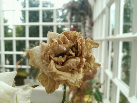 dead flowers: Dead flowers Stock Photo
