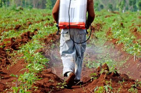 farmer spraying pesticide in the cassava field