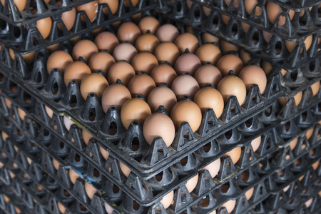 sort out: pattern and background- fresh chicken egg in the plastic package from chicken farm, thailand Stock Photo