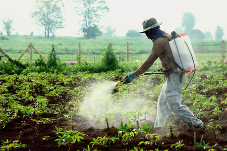 pollutant: farmer spraying pesticide in the cassava field