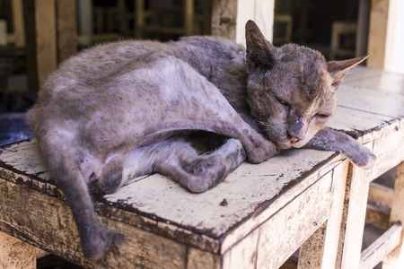 piteous: homeless Skinny sick cats sleep on wood chair
