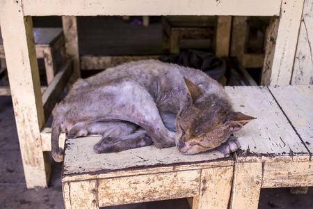 piteous: homeless Skinny sick cats sleep on wood chair