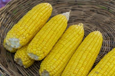 maiz: Callos dulces amarillas en bandeja de mimbre