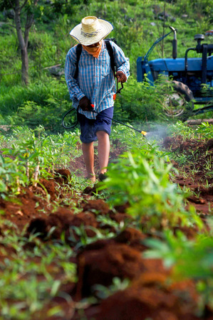 fungicide: farmer spraying pesticide with protective clothing, use only the clothes off the nose and facein the cassava field in the morning, thailand, asia - How spraying invalid