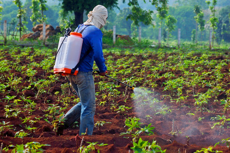 without clothes: farmer spraying pesticide without protective clothing, use only the clothes off the nose and face, in the cassava field in the morning, thailand, asia - How spraying invalid