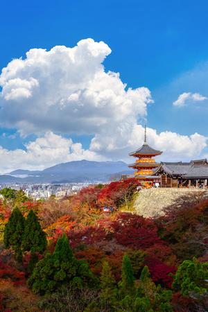 Kyoto, Japan - NOVEMBER 25, 2016.- the beautiful Momiji autumn colorful maple background at Kiyomizu-Dera temple and Kyoto, Japan, Kiyomizu-Dera is UNESCO world heritage sites