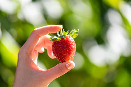 Red fresh strawberry hold on women's hand with green outdoor background