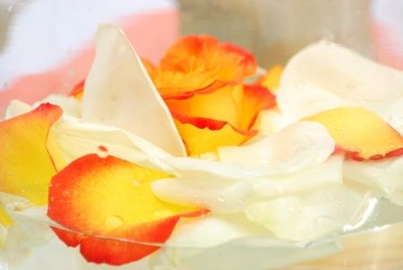 Rose petals floating on water Reklamní fotografie